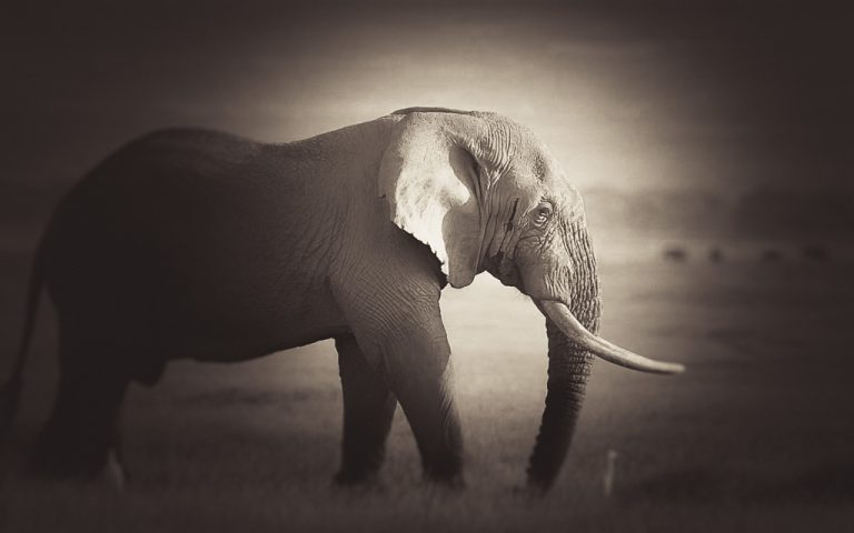 Free Lightroom Preset: Vintage Wildlife Mono
